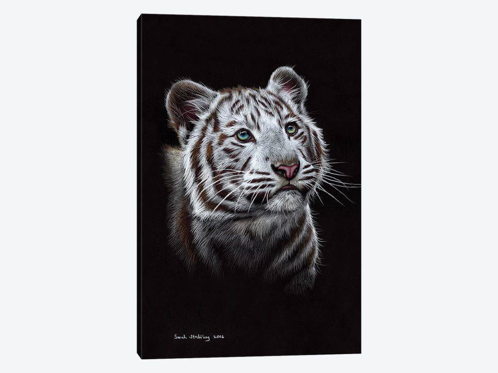 White Tiger III by Sarah Stribbling 1-piece Canvas Artwork
