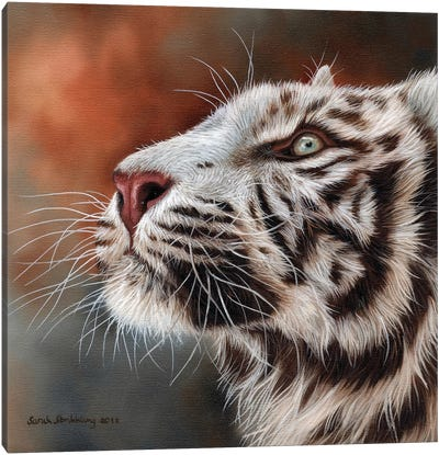 White Tiger IV Canvas Art Print