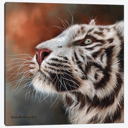White Tiger IV Canvas Print #SAS109} by Sarah Stribbling Canvas Art
