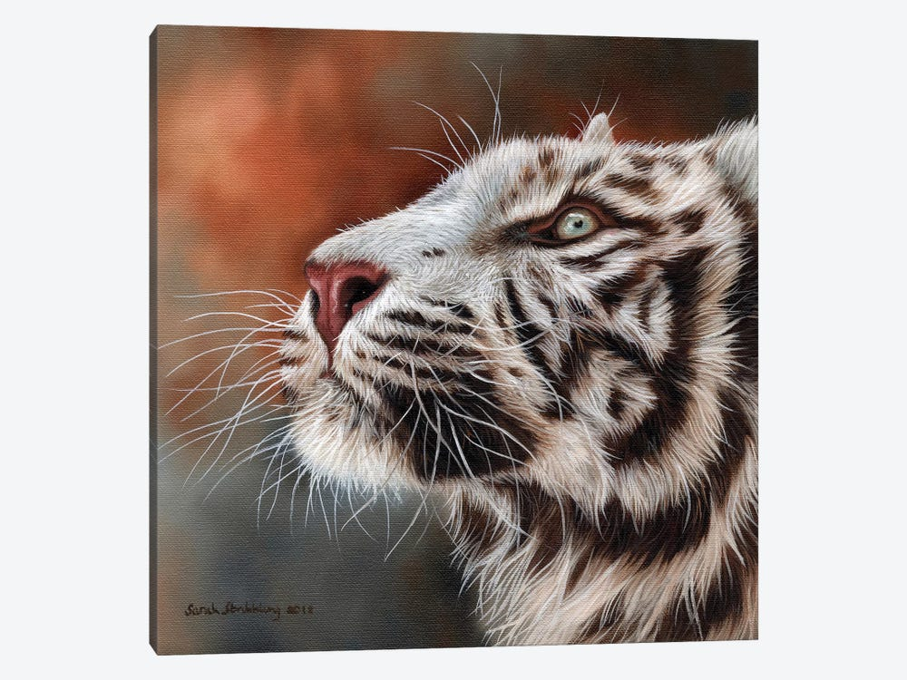 White Tiger IV by Sarah Stribbling 1-piece Canvas Print