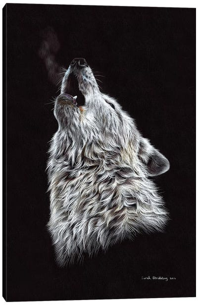 White Wolf Howling Canvas Art Print