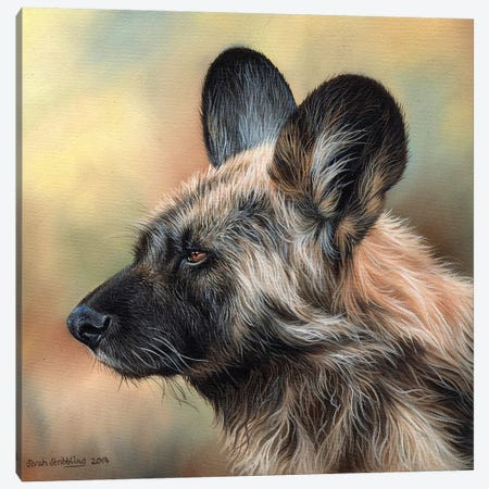 Wild Dog Canvas Print #SAS111} by Sarah Stribbling Art Print