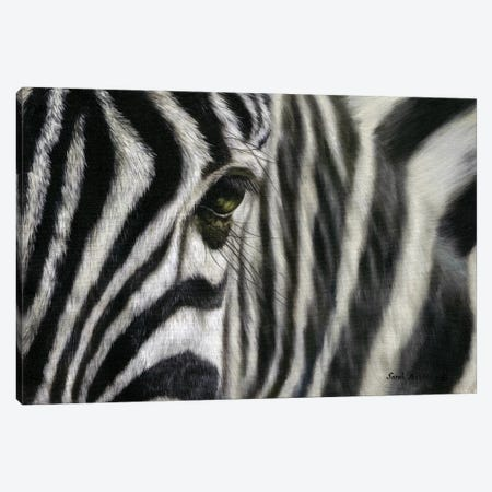 Zebra I Canvas Print #SAS117} by Sarah Stribbling Canvas Art