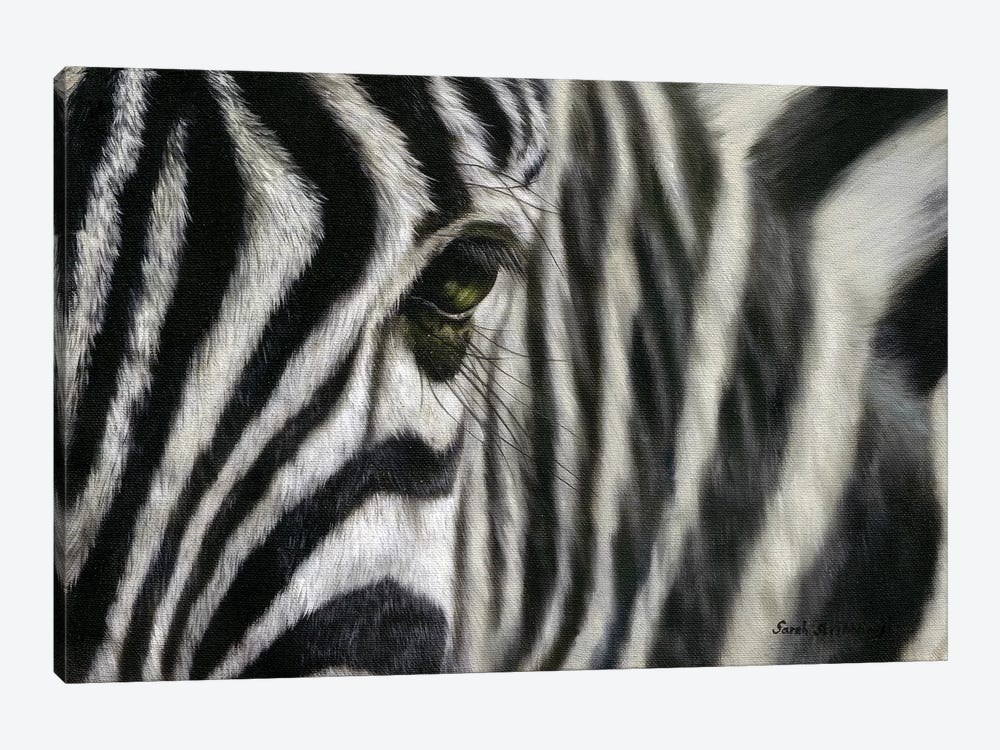 Zebra I by Sarah Stribbling 1-piece Canvas Artwork