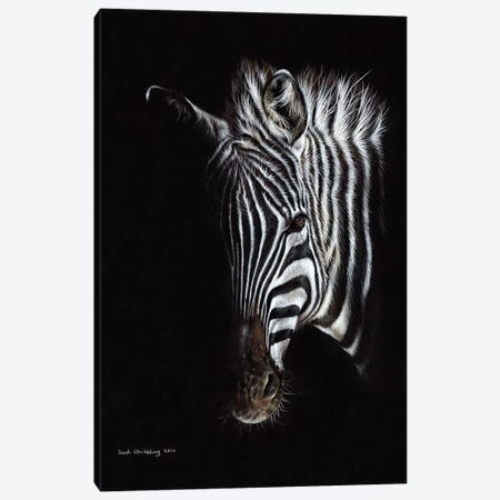 Zebra Black I Canvas Print #SAS118} by Sarah Stribbling Canvas Art Print