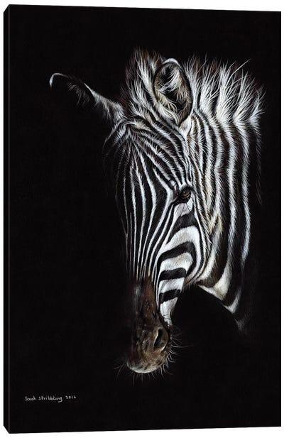 Zebra Black I Canvas Art Print