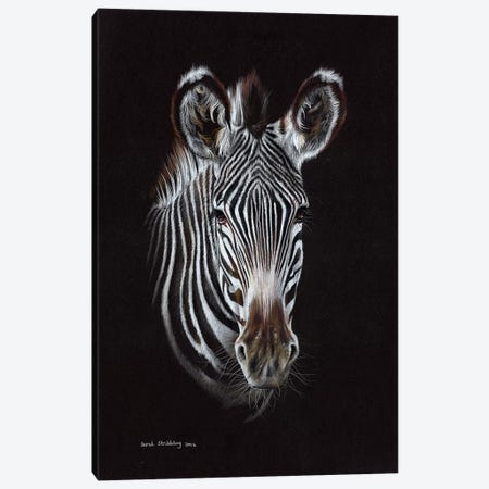 Zebra II Canvas Print #SAS119} by Sarah Stribbling Canvas Print