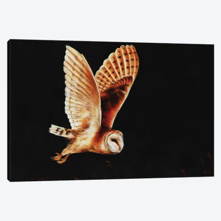 Barn owl Canvas Print #SAS11} by Sarah Stribbling Canvas Artwork