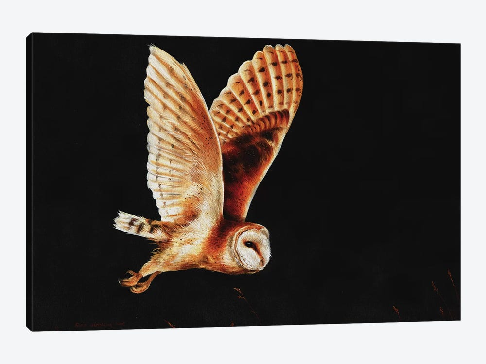 Barn owl by Sarah Stribbling 1-piece Art Print