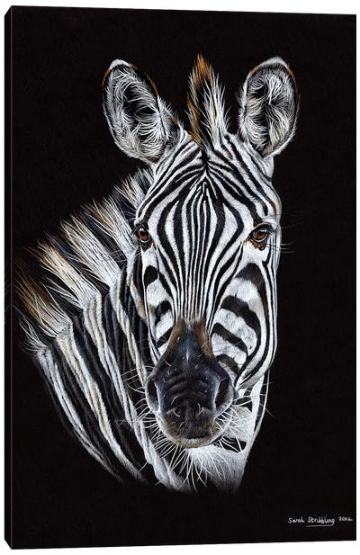 Zebra Black III Canvas Art Print