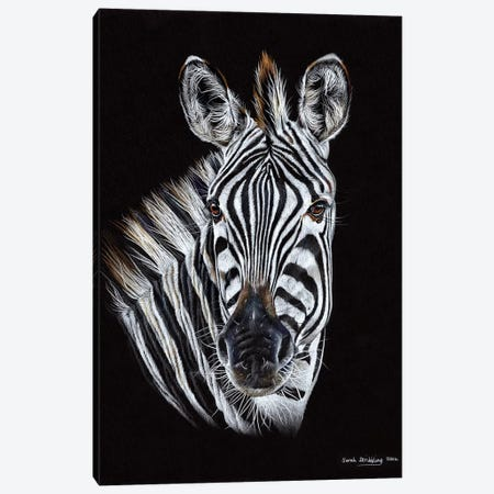Zebra Black III Canvas Print #SAS121} by Sarah Stribbling Canvas Artwork