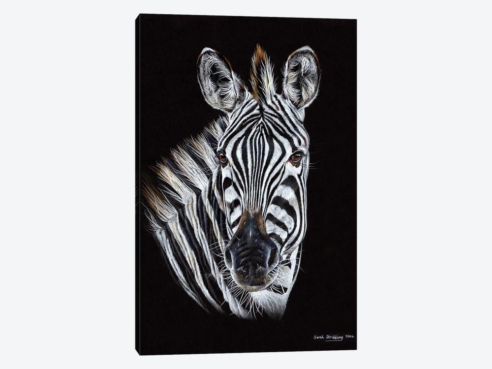 Zebra Black III by Sarah Stribbling 1-piece Canvas Art Print