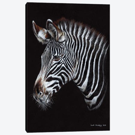 Zebra III Canvas Print #SAS122} by Sarah Stribbling Canvas Artwork