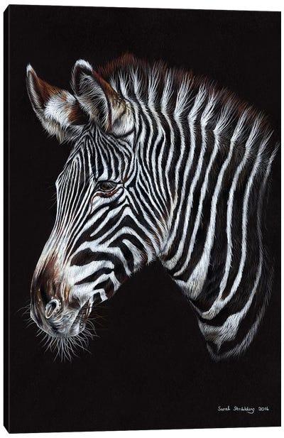 Zebra III Canvas Art Print