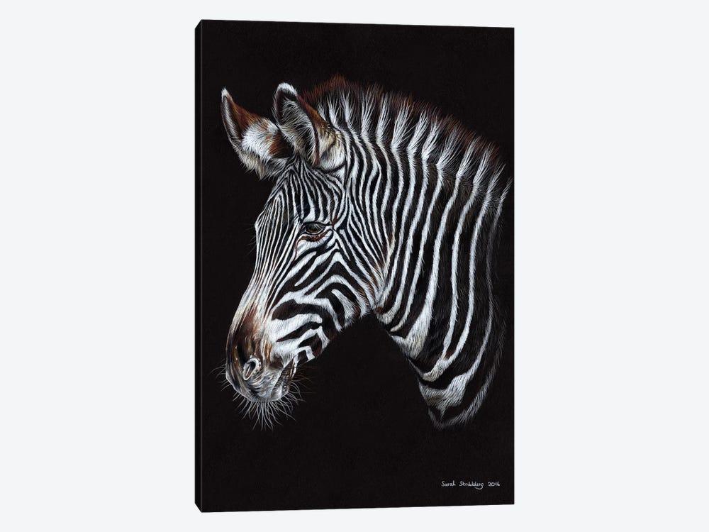 Zebra III by Sarah Stribbling 1-piece Canvas Artwork