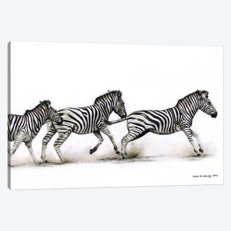 Zebras Running Canvas Print #SAS123} by Sarah Stribbling Canvas Art