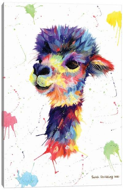 Multicolor Alpaca Canvas Art Print