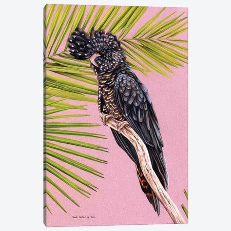 Black Cockatoo Canvas Print #SAS125} by Sarah Stribbling Art Print