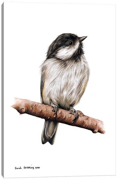 Chickadee II Canvas Art Print