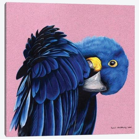 Hyacinth Macaw Canvas Print #SAS133} by Sarah Stribbling Art Print