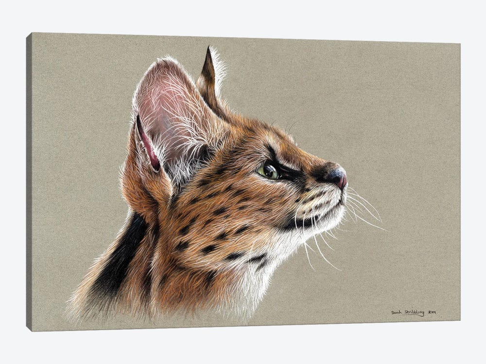 Serval by Sarah Stribbling 1-piece Canvas Art