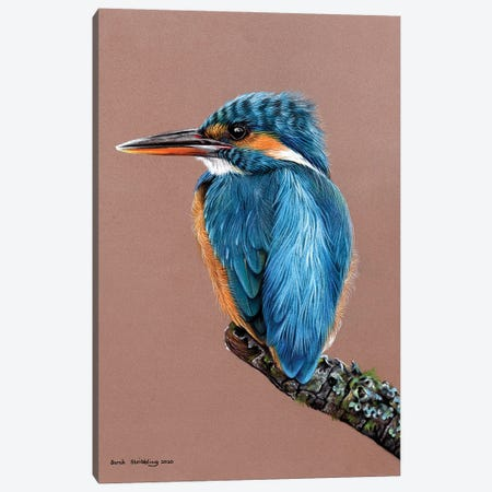 Kingfisher Pastel Drawing Canvas Print #SAS137} by Sarah Stribbling Canvas Art