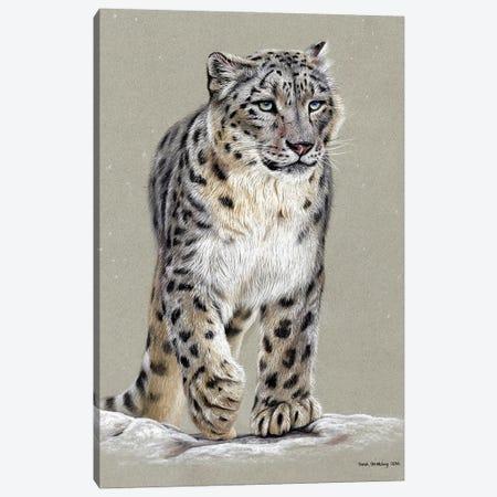Snow Leopard Pastel Drawing Canvas Print #SAS138} by Sarah Stribbling Canvas Art Print