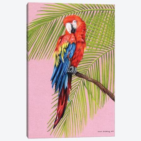 Scarlet Macaw Canvas Print #SAS142} by Sarah Stribbling Canvas Artwork