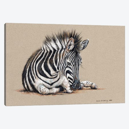Zebra Drawing Canvas Print #SAS143} by Sarah Stribbling Canvas Artwork