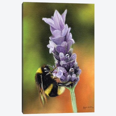 Bee On A Flower Canvas Print #SAS14} by Sarah Stribbling Canvas Print