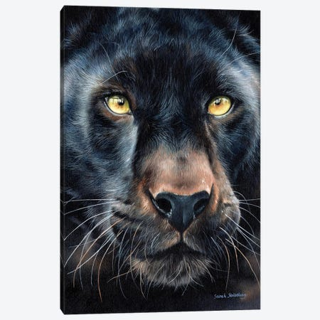 Black Panther Canvas Print #SAS15} by Sarah Stribbling Art Print