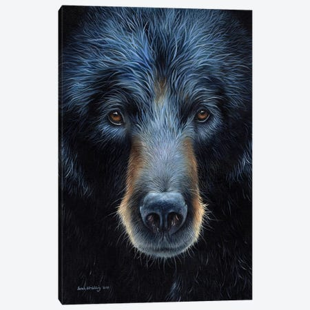Black Bear I Canvas Print #SAS16} by Sarah Stribbling Canvas Art Print