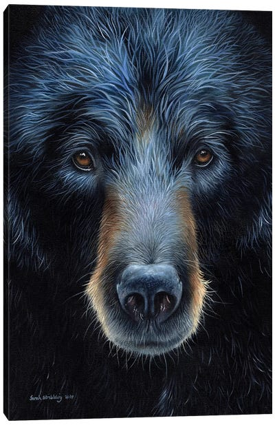Black Bear I Canvas Art Print