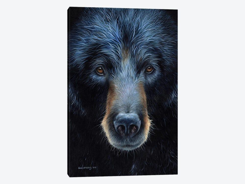 Black Bear I by Sarah Stribbling 1-piece Canvas Art