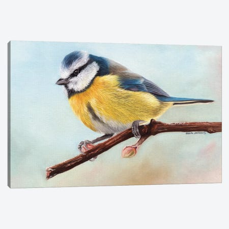 Blue Tit Canvas Print #SAS18} by Sarah Stribbling Canvas Art