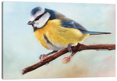 Blue Tit by Sarah Stribbling Canvas Art Print