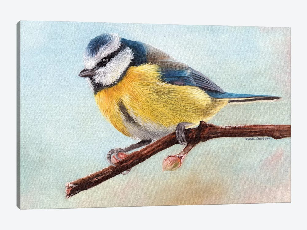 Blue Tit by Sarah Stribbling 1-piece Canvas Art