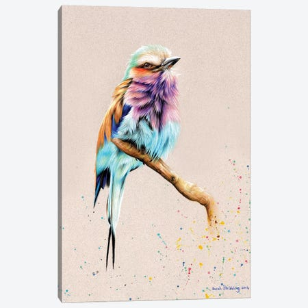 Breasted Roller  Canvas Print #SAS19} by Sarah Stribbling Canvas Wall Art