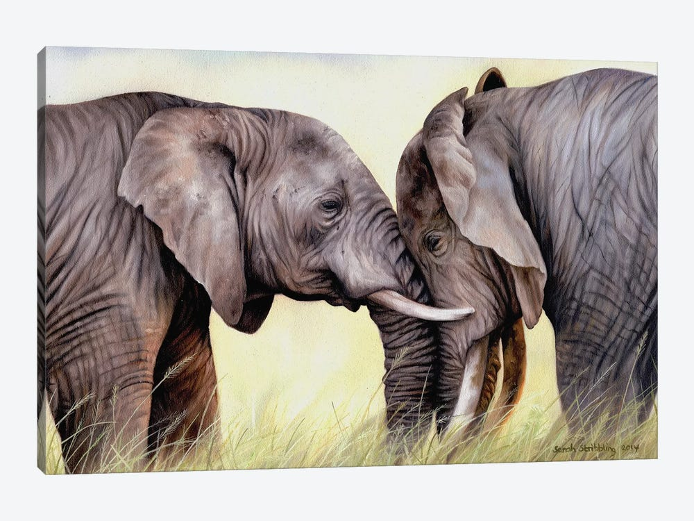 African Elephants by Sarah Stribbling 1-piece Canvas Artwork