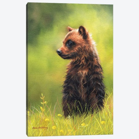 Brown Bear Cub Canvas Print #SAS20} by Sarah Stribbling Art Print