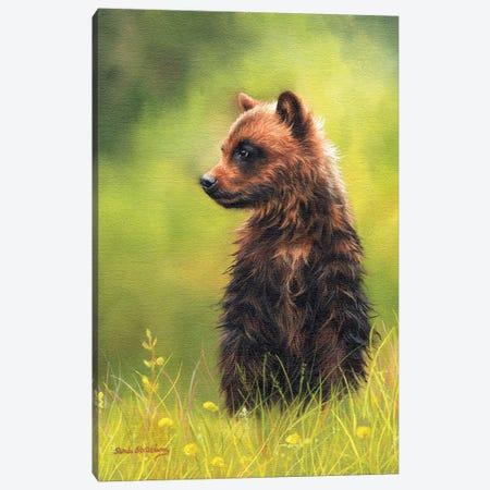 Brown Bear Cub Canvas Print #SAS20} by Sarah Stribbling Art Print