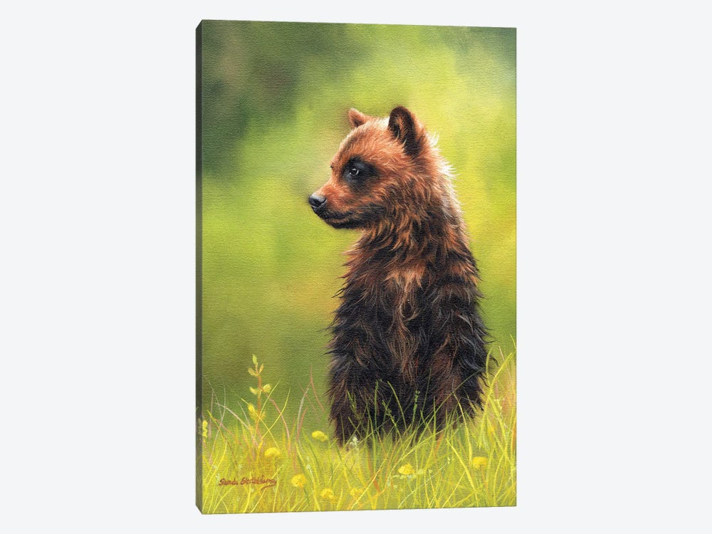 Brown Bear Cub by Sarah Stribbling 1-piece Canvas Art Print