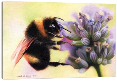 Bumblebee I Canvas Art Print
