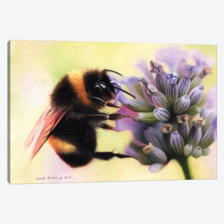 Bumblebee I Canvas Print #SAS21} by Sarah Stribbling Canvas Print
