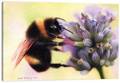 Bumblebee I Canvas Art Print