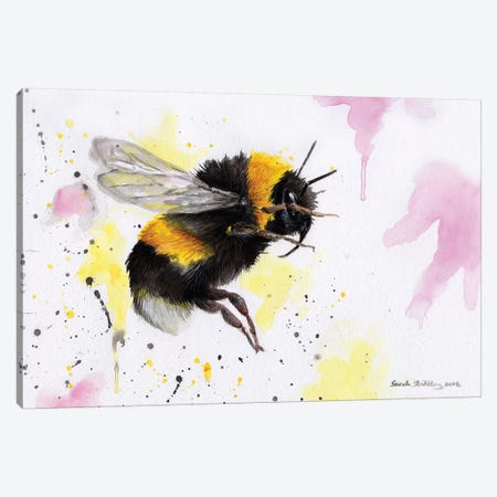 Bumblebee III Canvas Print #SAS23} by Sarah Stribbling Canvas Art Print