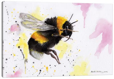 Bumblebee III Canvas Art Print