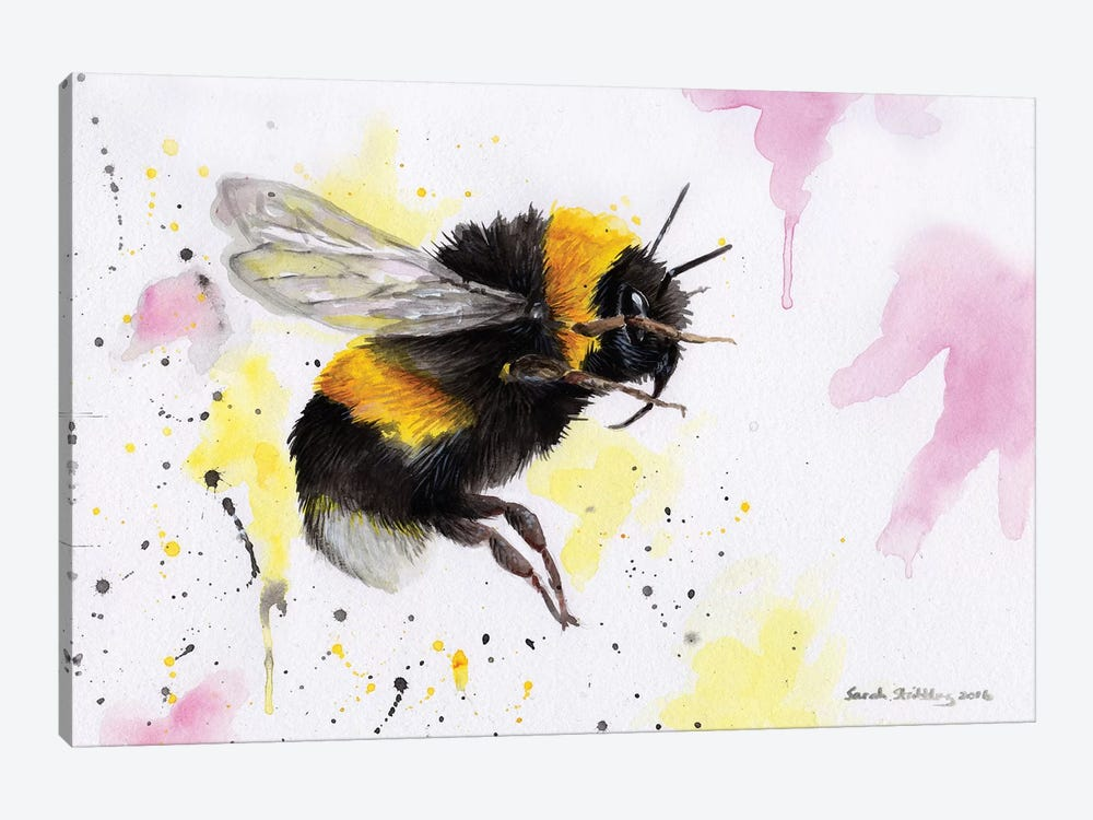Bumblebee III by Sarah Stribbling 1-piece Canvas Art