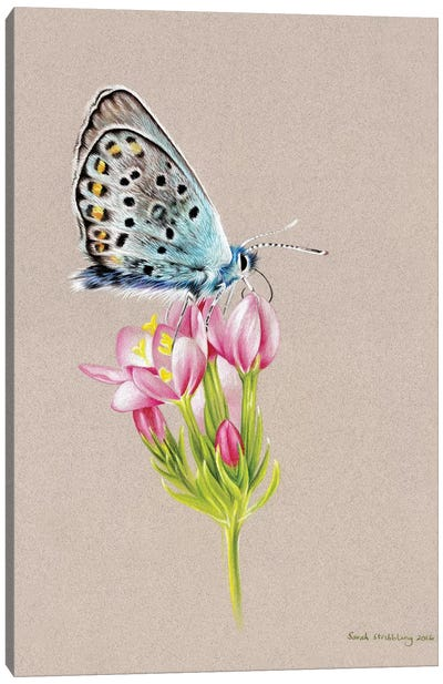 Butterfly Toned Canvas Art Print
