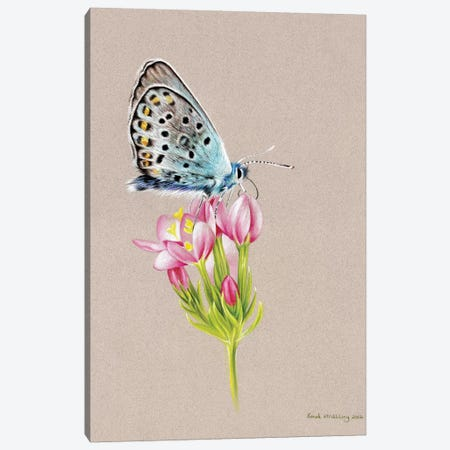 Butterfly Toned Canvas Print #SAS24} by Sarah Stribbling Canvas Wall Art